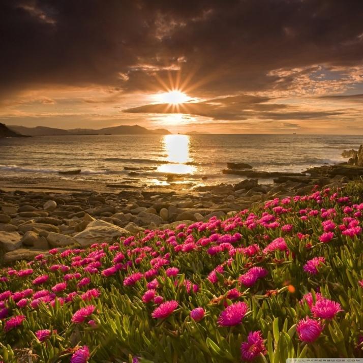 77) The Roses Beach